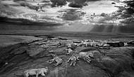 'Yılın Vahşi Yaşam Fotoğrafçısı' Yarışmasından Ödüllü 10 Fotoğraf