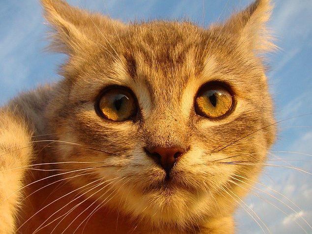 2. Kediler karanlıkta insanlardan 6 kat daha iyi görürler.