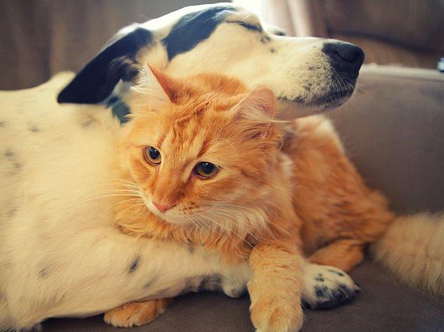 3. Kediler 100, köpekler ise 10 değişik ses çıkartabilirler.