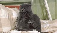 Kedi Sahibi Olmanın Beraberinde Getirdiği 9 Şey