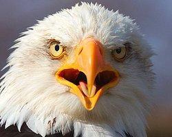 Kuşların 116 Milyon Yıl Önce Dişleri Vardı