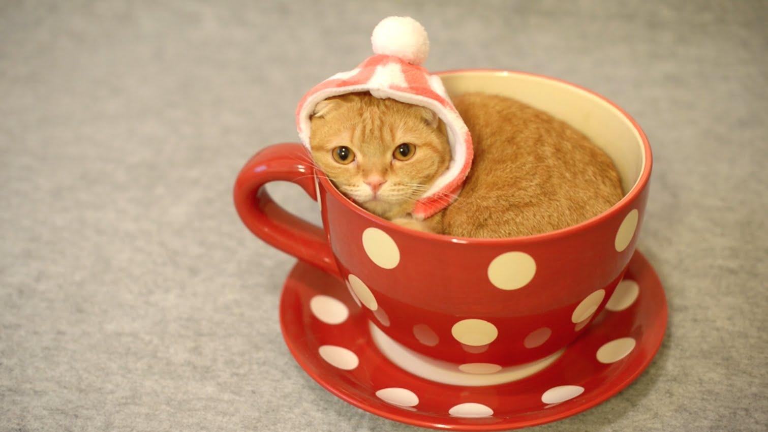 Чашка чая смешная картинка