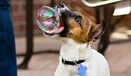Bünyenizde Sevgi Patlaması Yaratacak Kusursuz Zamanlamalı 25 Köpek Fotoğrafı