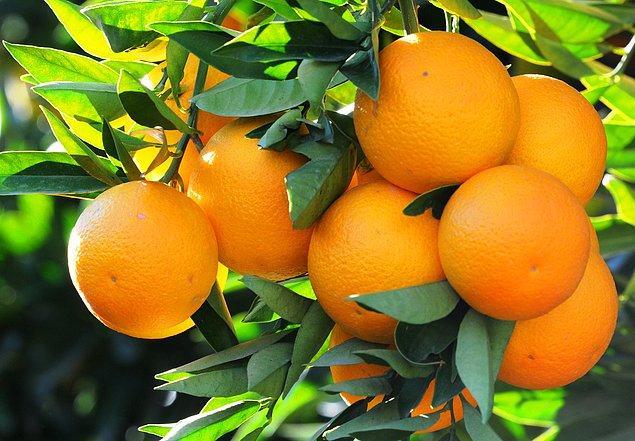 7- Amerika'da otel odalarında portakal soymak yasak.