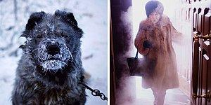 Dünyanın En Soğuk Yeri Yakutsk'a Giden Sanatçının Çektiği 22 Buz Gibi Fotoğraf