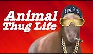 Thug Life Animals