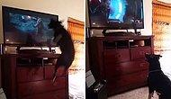 Televizyon İzlerken Kendinden Geçen Köpek
