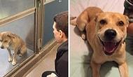 Barınak Hayvanları İçin Aileye Sahip Olmanın Mutluluğunu Gösteren 16 Öncesi/Sonrası Fotoğrafı
