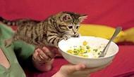 Karnını Doyurmak Uğruna Komik Duruma Düşmüş 20 Kedi