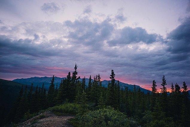 47. ''Denali National Park'a vardık ve yürüyüşe çıktık. Gece saat 1 civarı evet yanlış duymadınız gece saat 1.''