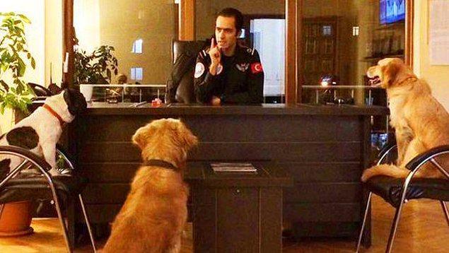 7. Üç Sokak Köpeği Belediyenin Arama-Kurtarma Ekibinde 'İşe Başladı'