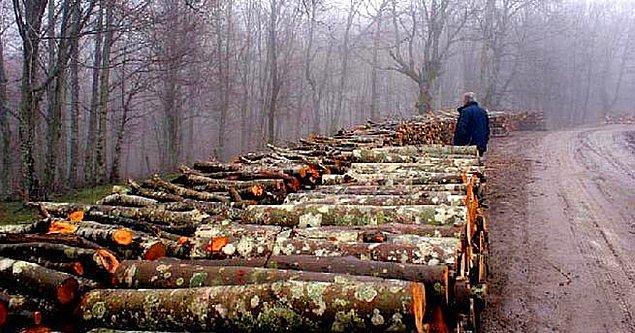 6. 5 Yılda 129 Bin Hektar Orman Tahsise Gitti