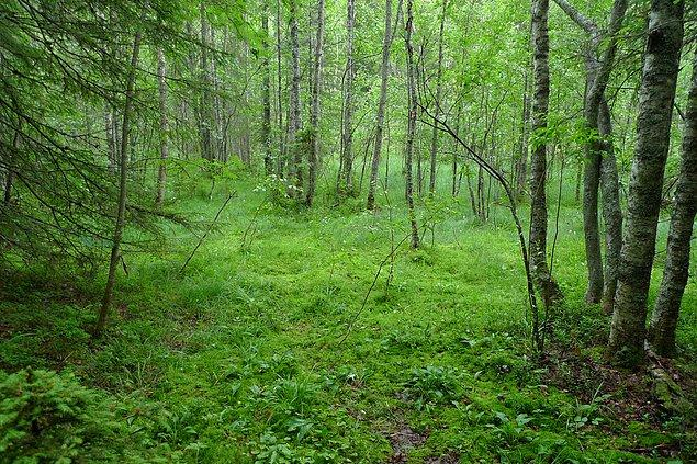 1. Çünkü ülkenin yarısı böyle görünen ormanlarla dolu.