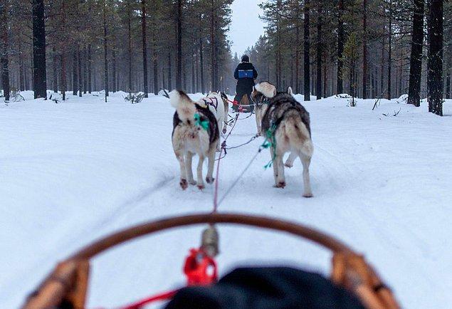 39. Ve eğer tatlılıktan ölmek istiyorsanız, bir husky alabilir ve birlikte Finlandiya'nın derinliklerine kayak yapabilirsiniz.