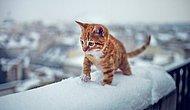 Karla İlk Kez Tanışmış 25 Sevimli Hayvan