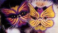 Bir Kere Baktıktan Sonra Dönüp Dönüp Tekrar Bakacağınız 8 Kedi Modeli