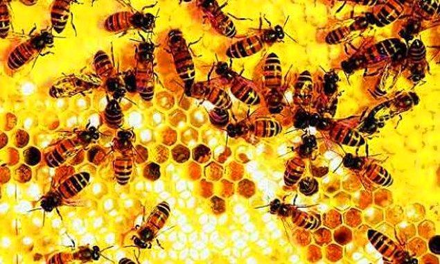 9. Arı kolonisinin yok oluşu