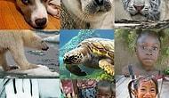 Aç hayvanlara ve insanlara yardım etmek ister misiniz?