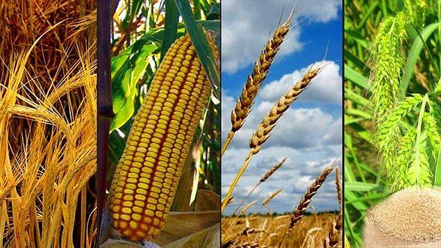 """12. Alternatiflerine, buğday, pirinç, mısır, vb. göre sahip olduğu belirgin avantajlarla """"bir işte en iyi olmanın"""" önemini vurgular patates."""