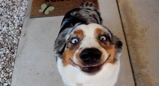 9. Hayatın ve evrenin karmaşasını anlayamayan bu köpek, artık daha fazla idare edemeyecek