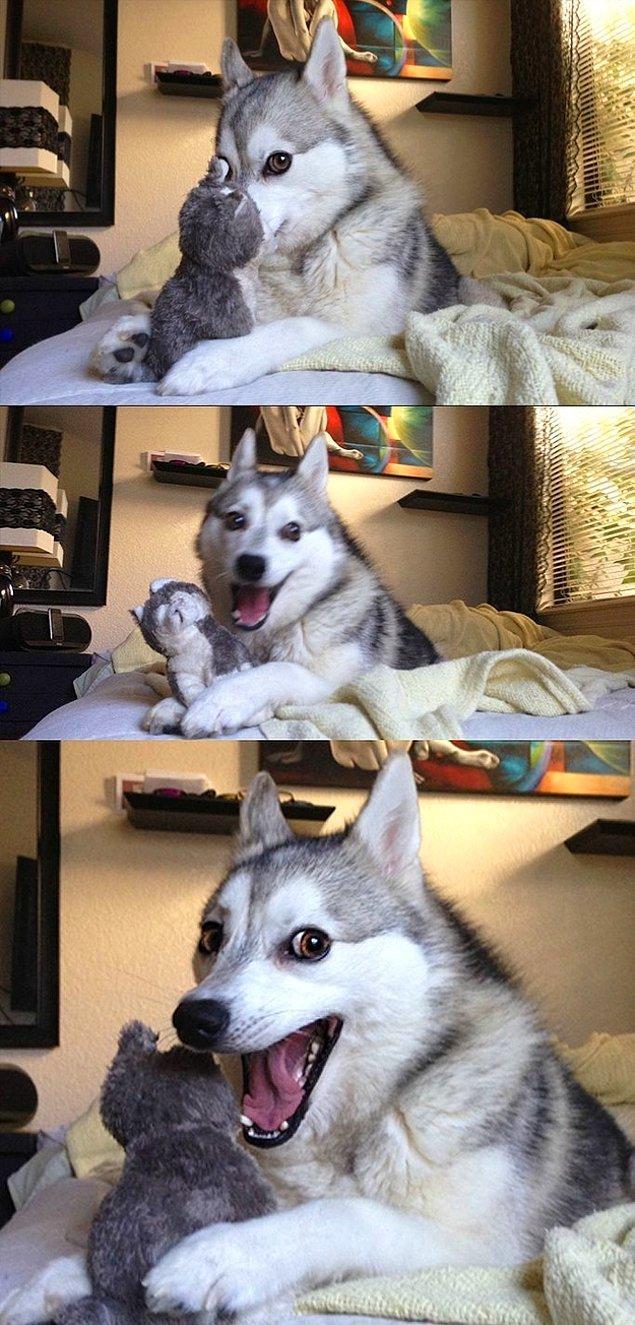 12. Ve oyuncağını idare edemeyen bu köpek... Nasıl idare edebilir ki?