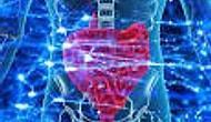 Vücudunuzdaki İkinci Beyninizden Haberiniz Var Mı ?