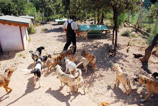 6. Bursa'da 84 Sokak Köpeği Zehirlenerek Öldürüldü