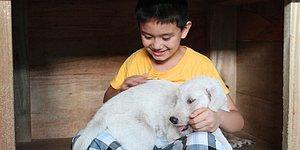 """Küçük Bir Yardımseverin Başarı Hikayesi: """"Mutlu Hayvanlar Barınağı"""""""