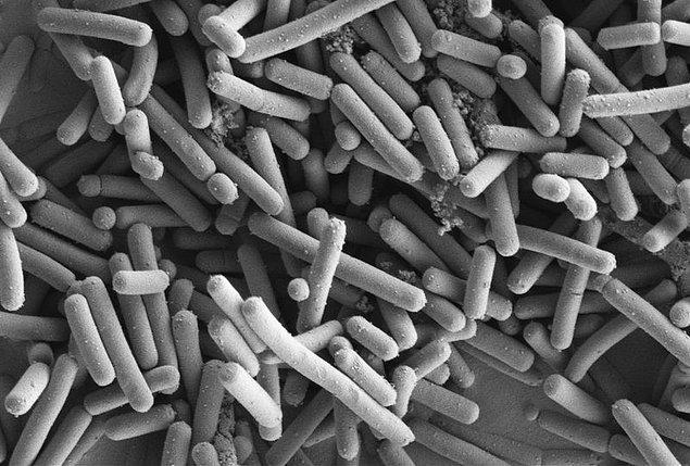 Kaka çoğunlukla bakteriden oluşur, yiyecek atığından değil.