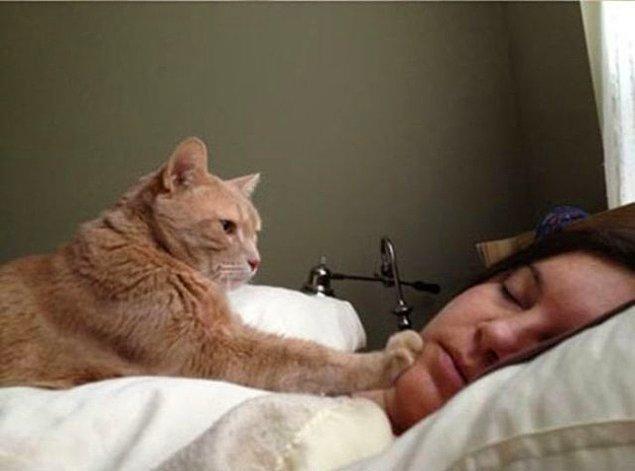 14. Gerçek aşkın kedi olsun, köpek olsun, hamster olsun ama insan olmasın(!) mantığına dayandığını çok iyi bilirsiniz.