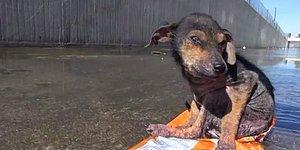 İnsanlıktan Nasibini Almayanların Elinden Kurtulup Mutluluğa Kavuşan Köpek