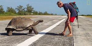 Çiftleşirken Rahatsız Edilen Kaplumbağanın Saldırgan Tavırları