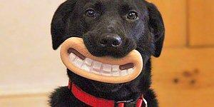 Oyuncaklarıyla Ne Kadar Komik Olduklarının Farkında Olmayan 10 Köpek