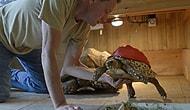 Hasta Kaplumbağa 3D Yazıcı ile Tedavi Edildi