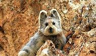 20 Yıllık Kaçamağın Ardından Objektiflere Yakalanan Sihirli Tavşanla Tanışın