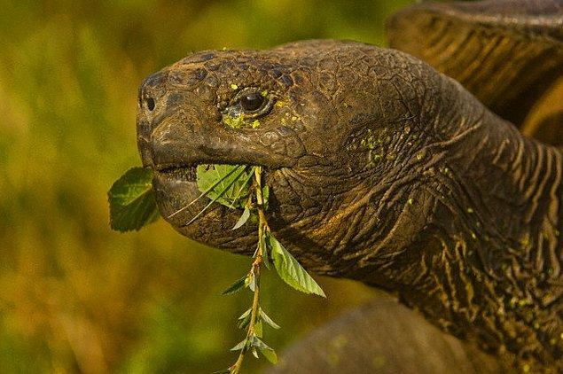 9. Kaplumbağa !