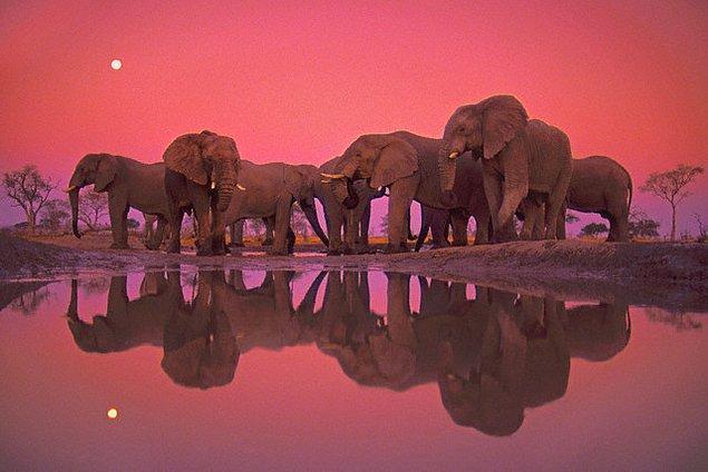 13. Afrika Fili !