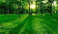 Doğayı Ne Kadar İyi Tanıyorsun?
