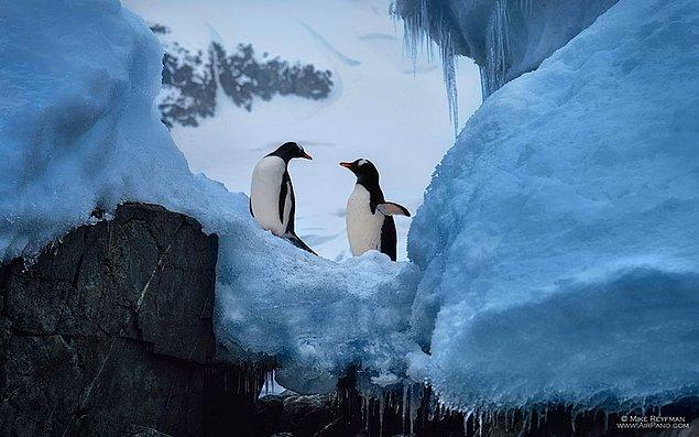 2. Belgesellere konu olan tutkulu ve değişik bir aşk yaşıyorlar Antarktika'da.