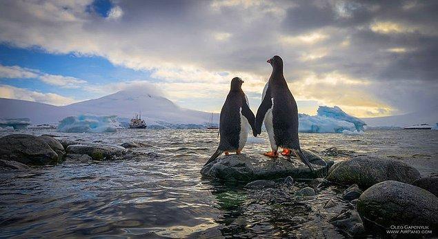 1. Penguenler sadece Güney Kutbu'nda yaşıyorlar. Üstelik her halleri farklı bir sevimlilik dolu