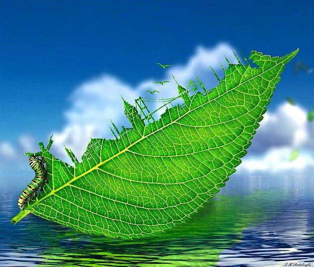 2. YAPRAK: Bir tırtılın kemirdiği yaprakta bir semazen ve İstanbul silüetini görüyoruz.