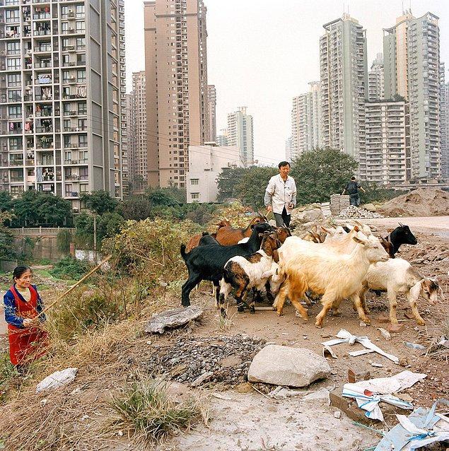 """4. 2007 yılında BBC, 4 milyondan fazla insanın 2020 yılında Çongçing'e taşınacağını """"çevresel felaket"""" olarak bildirip, uyardı."""