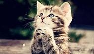selfie çeken tatliş hayvanlar ;)