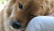 Bir köpeğin sahibine mektubu...