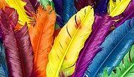 Senin Kişiliğini Hangi İlginç Renk Yansıtıyor?