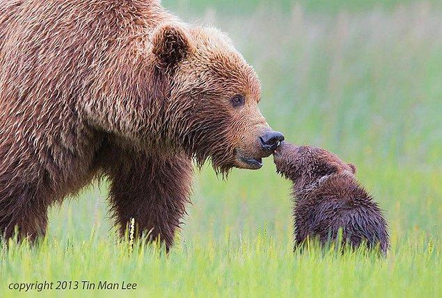 13. Öpücük ver anneye