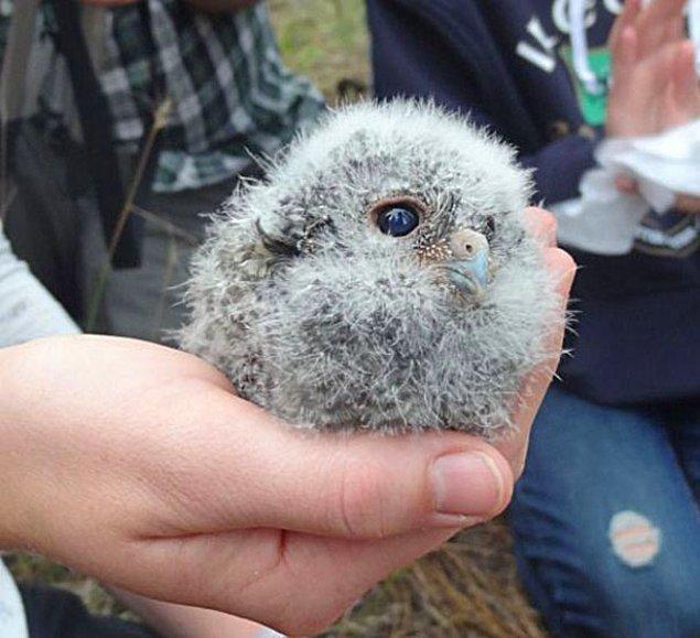 18. Ve Bir Avuç Baykuş