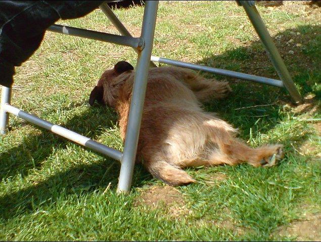 8. Köpeklerin güneşe değil de gölgeye yatmaya başlaması