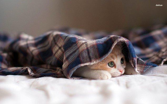 9. Soğuk ve yağmurlu bir günü, sıcak battaniyenin altında kalarak geçirmek.
