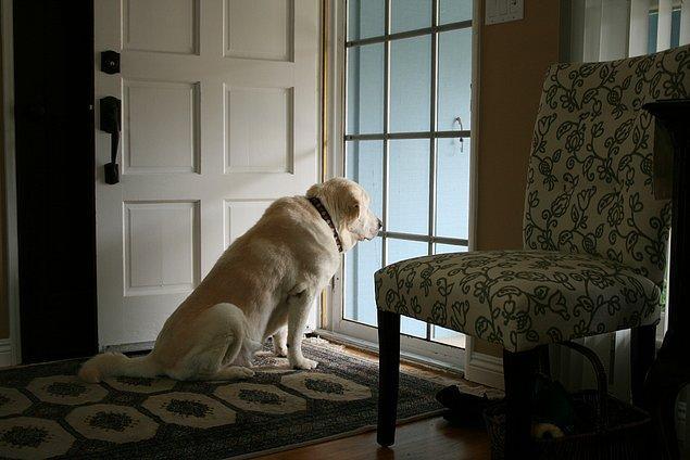 14. Eve her dönüşünüzde, sizi sevgiyle bekleyen biri olduğunu bilmek.